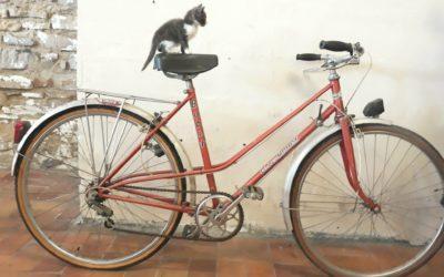 Louison tour : le Marais d'Orx à vélo